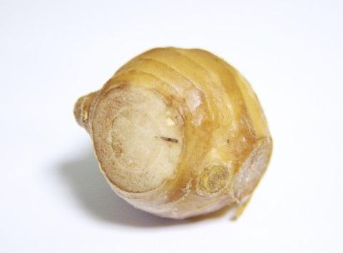 蒸し生姜パウダーは、ショウガオールが25倍