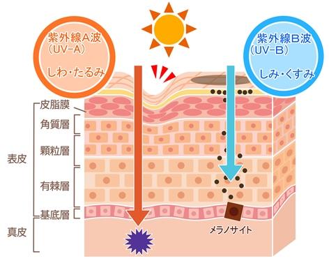 紫外線の肌への影響と光老化